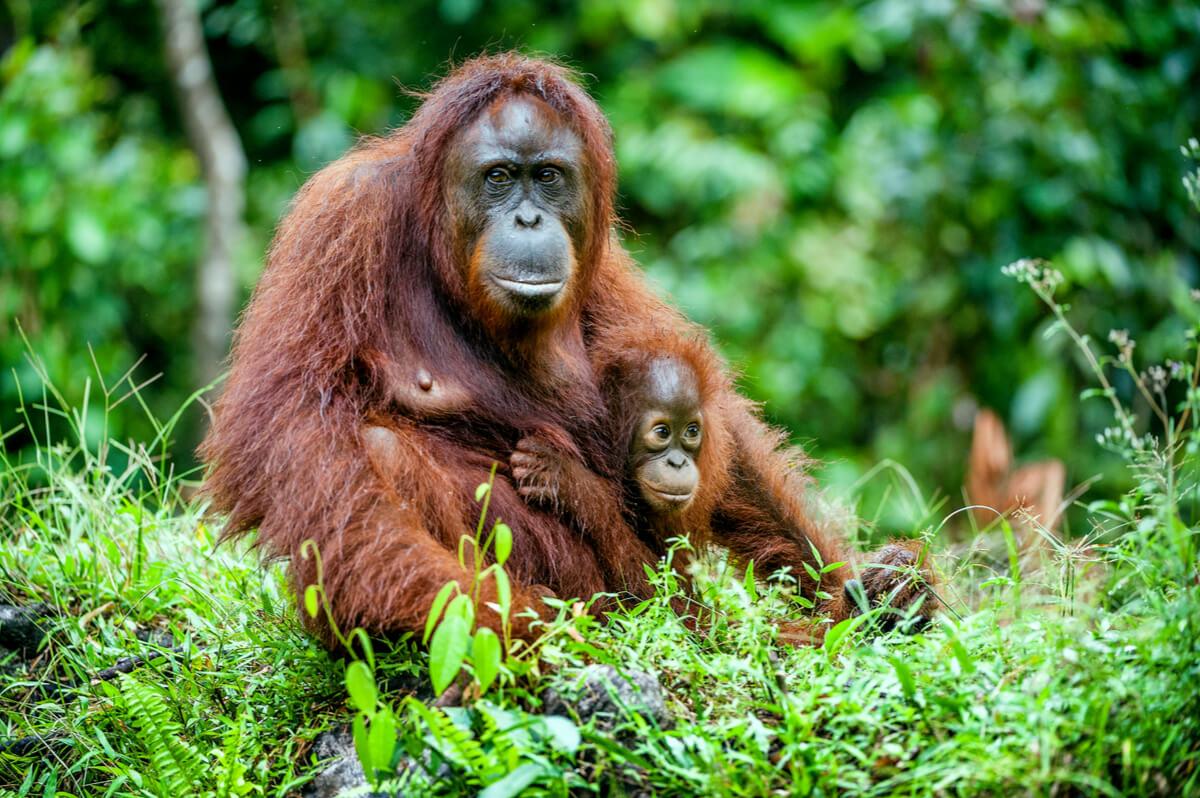 Las mejores madres de la naturaleza.