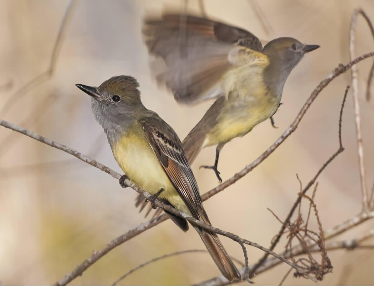 Unos pájaros vuelan por las ramas.