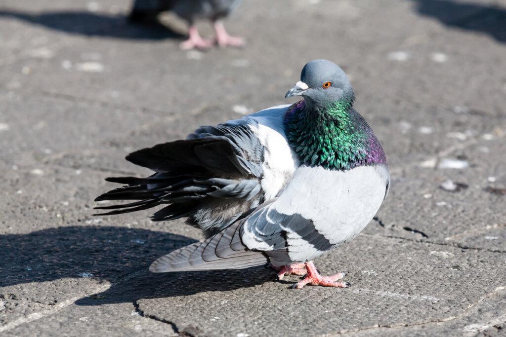 Tricomoniasis en pájaros: causas, síntomas y tratamientos