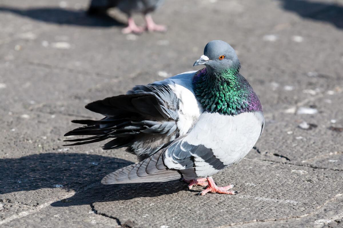Effrayer les oiseaux n'a pas à être difficile.