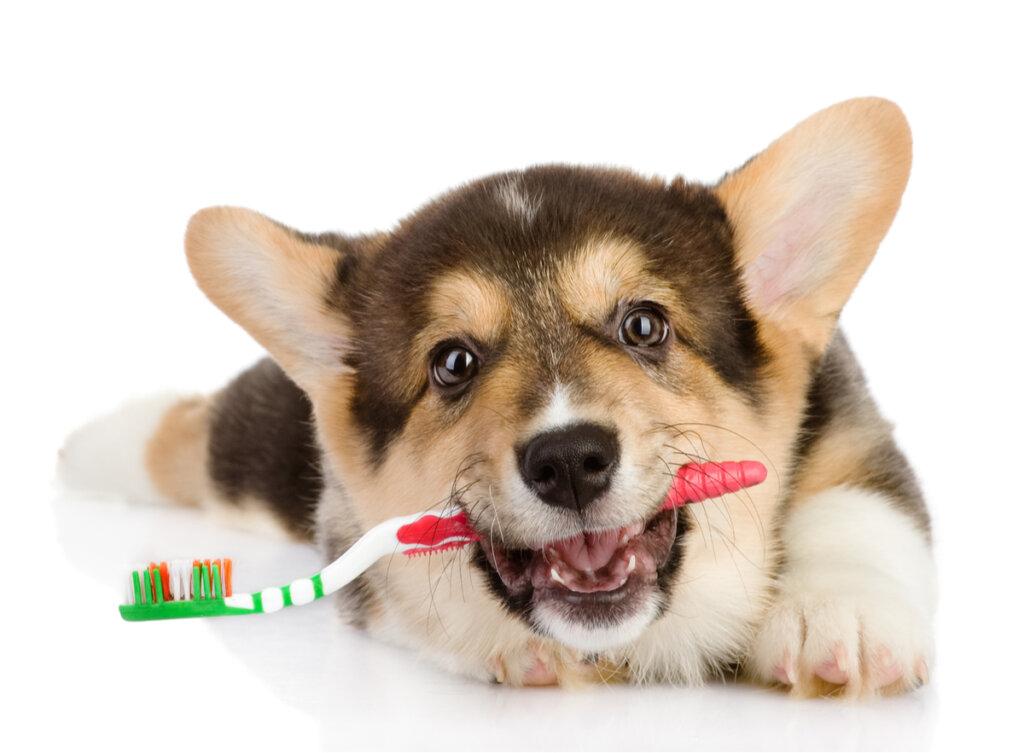 5 consejos para limpiar los dientes de los perros