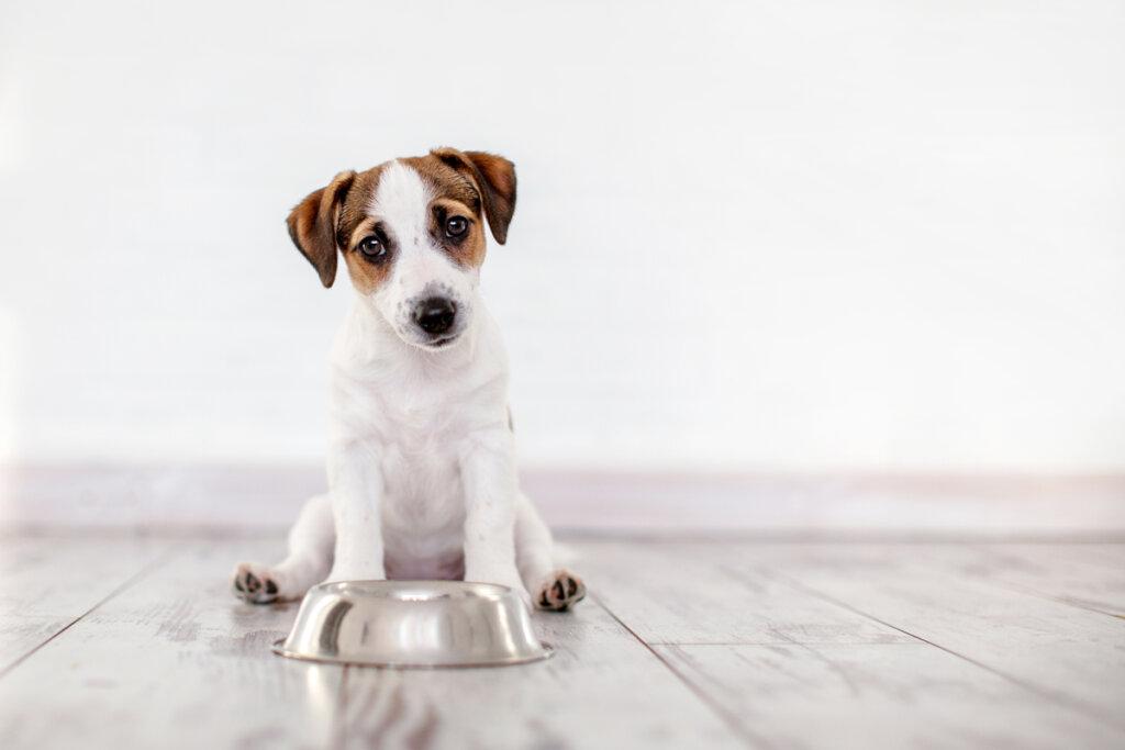 Perros celiacos: síntomas, diagnóstico y tratamiento