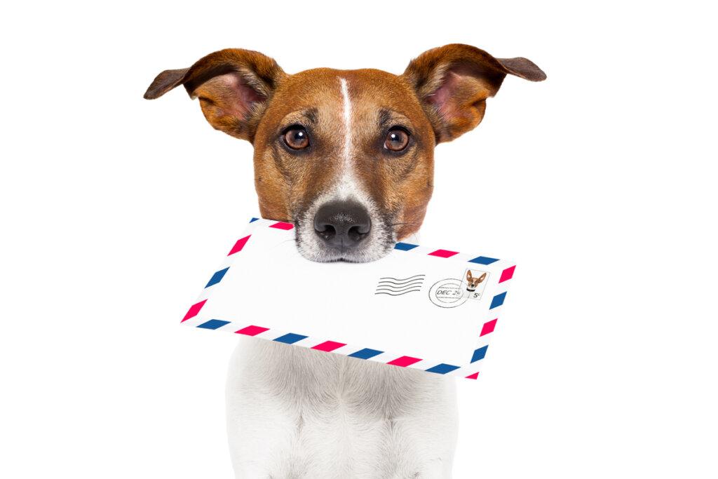 ¿Para que sirven los seguros de mascotas?