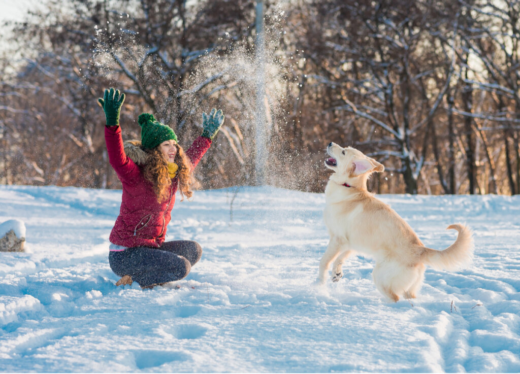 ¿Cómo pasear con un perro en la nieve?