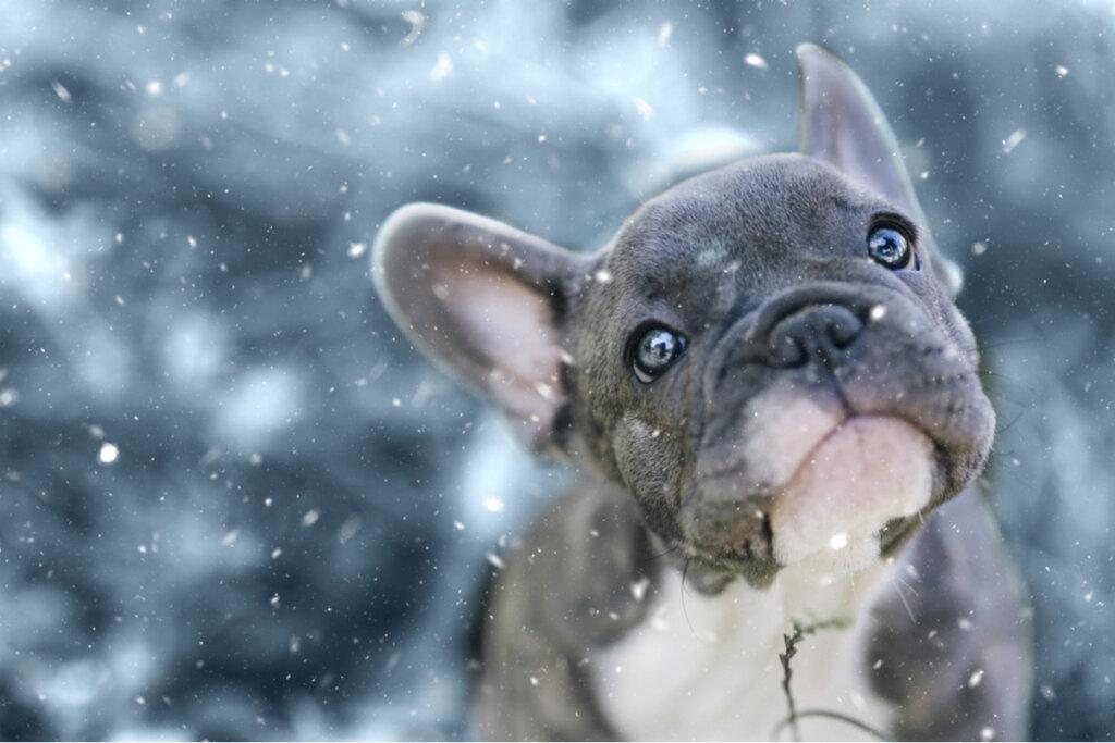 ¿Dónde ir en invierno con tu perro?