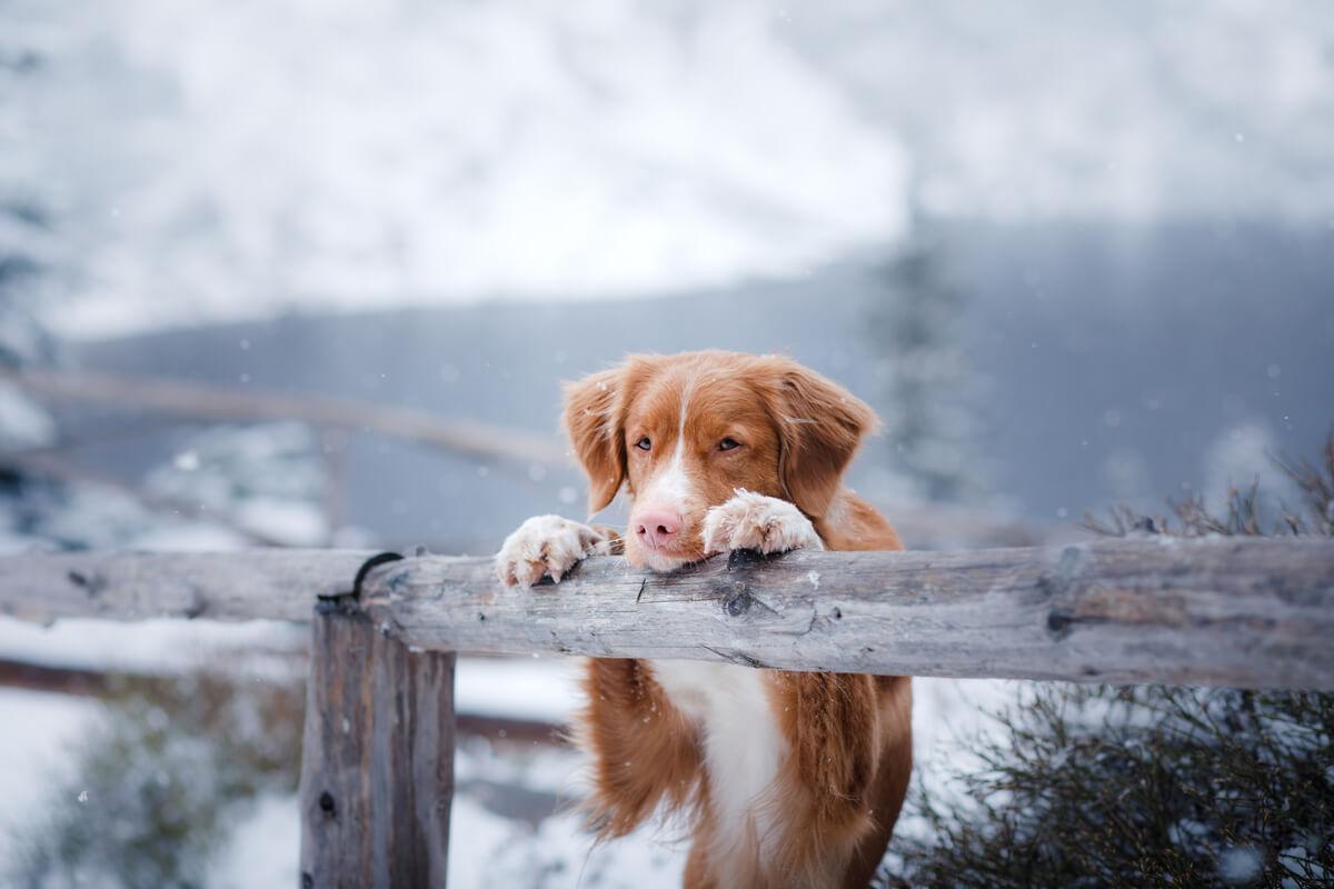Un perro en la nieve.