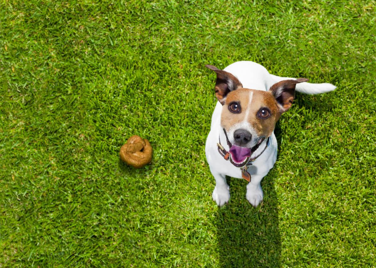 Un cane con la cacca.