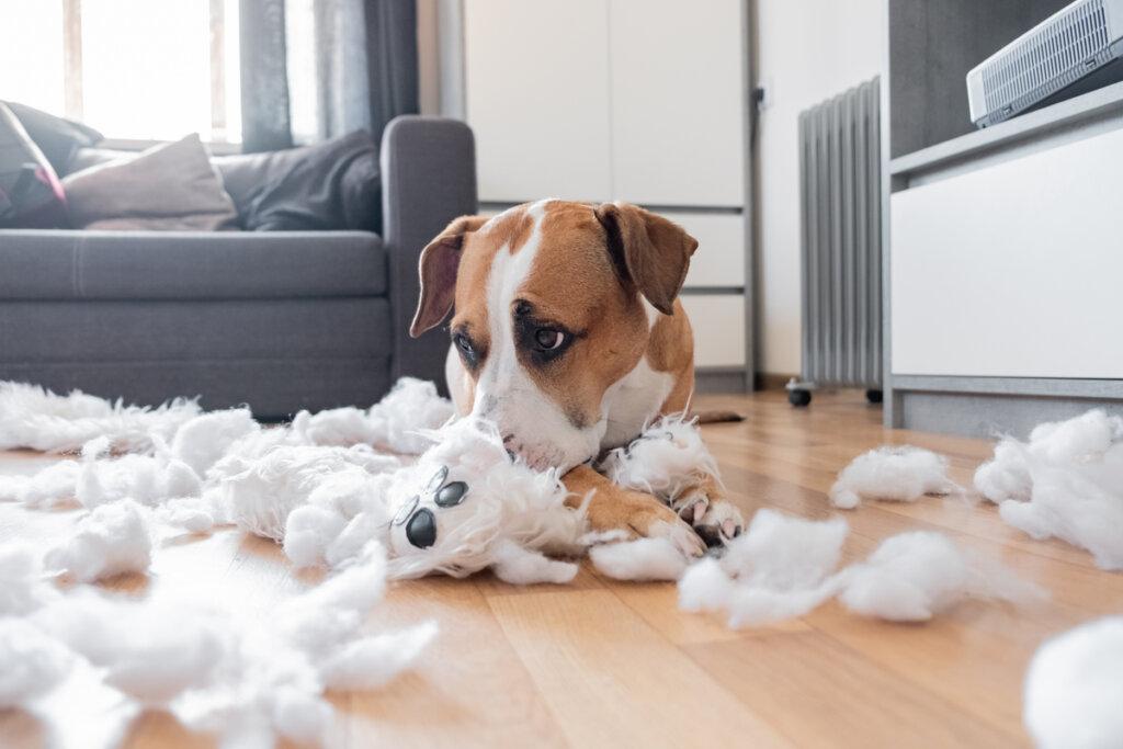 4 comportamientos anormales en perros