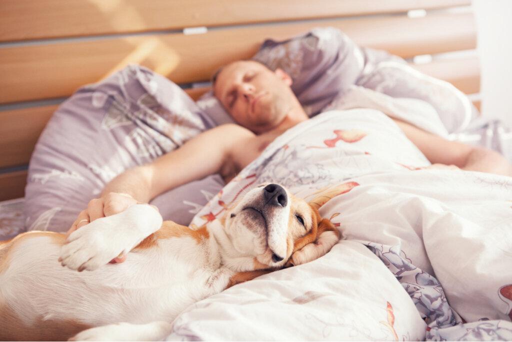 ¿Es saludable dormir con tu perro?