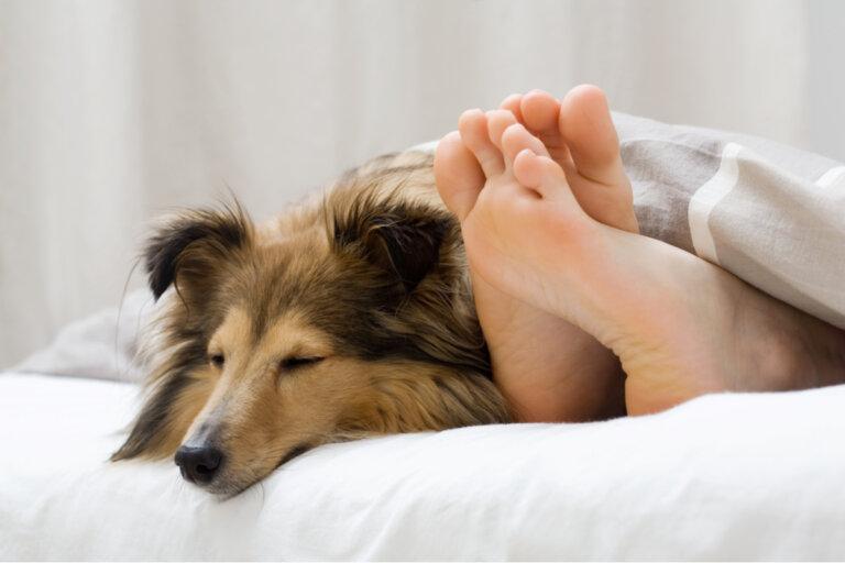 5 motivos por los que tu perro duerme a tu lado
