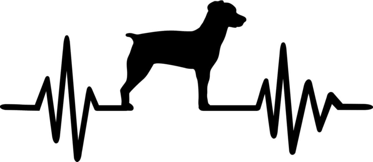 Vector del pulso de un perro.