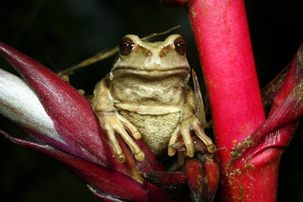 Las curiosidades de los anfibios son infinitas.