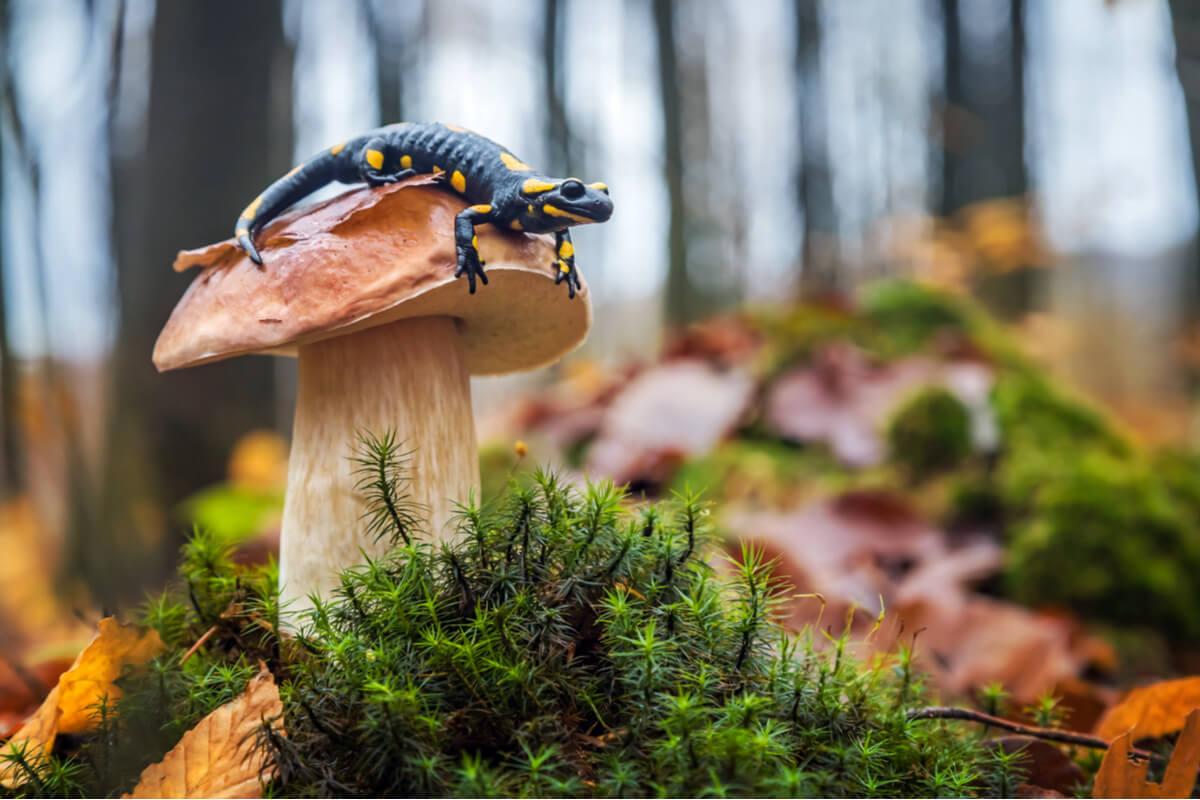 Una salamandra encima de una seta.