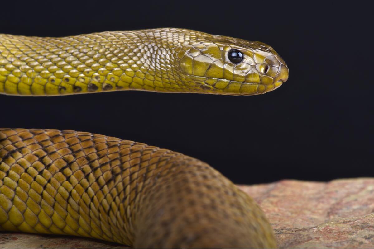 ¿Sabes cómo es el comportamiento de las serpientes?