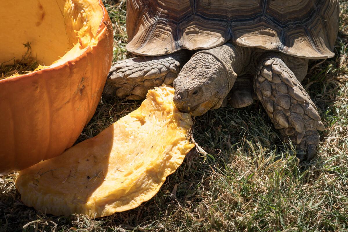 La importancia de cuidar el caparazón en las tortugas