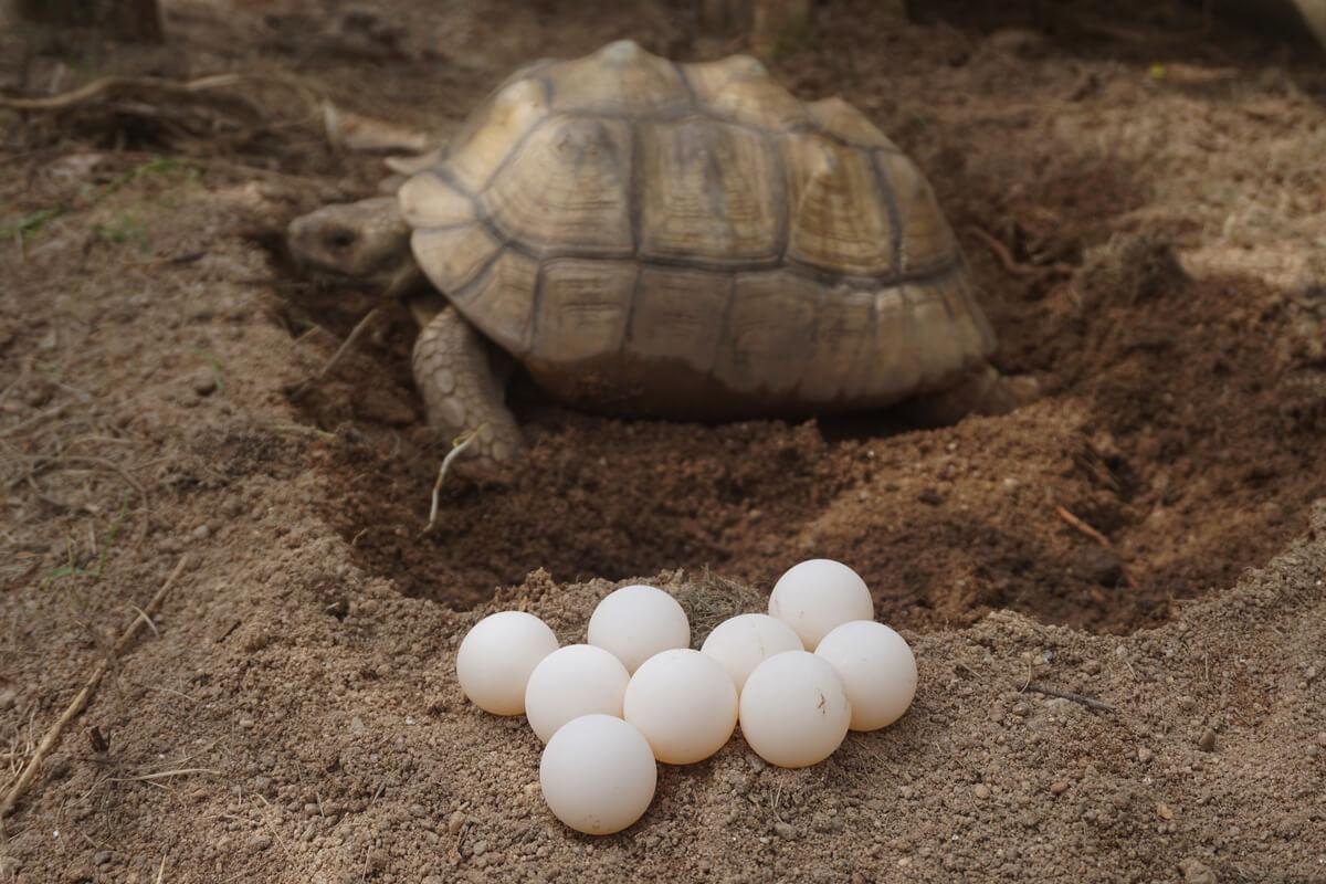 Los animales según sus tipos de reproducción pueden ser ovíparos.