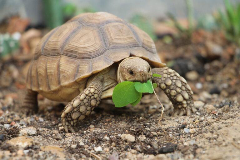 Hipovitaminosis A en reptiles: causas, síntomas y tratamiento