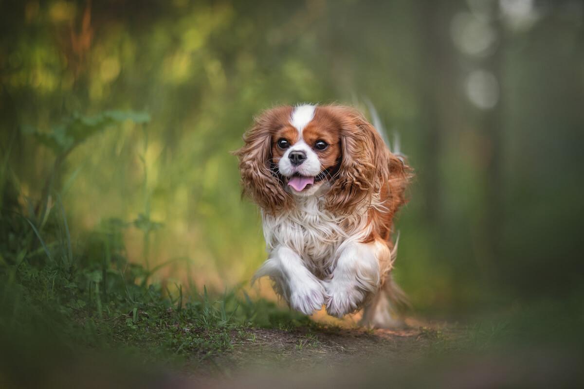 Una de las razas de perro más populares en Reino Unido.