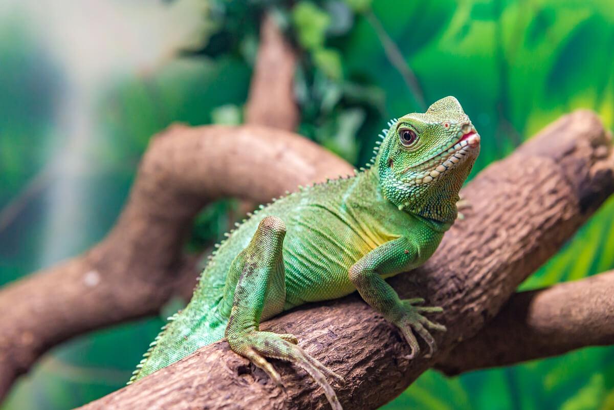 Un dragón de agua chino sobre una rama.