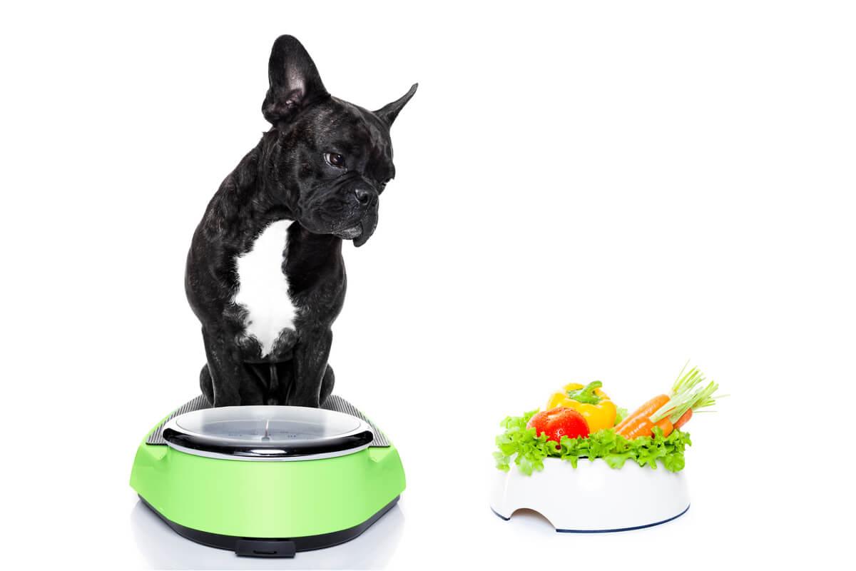 ¿Qué es el efecto rebote en perros?
