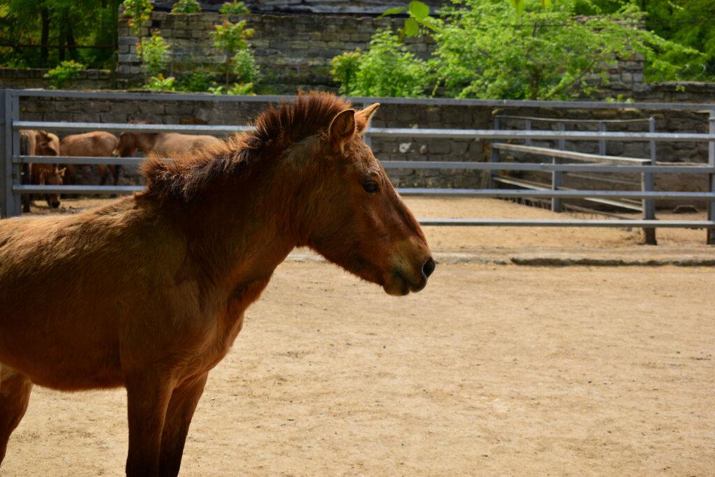 El encebro: el caballo salvaje ibérico