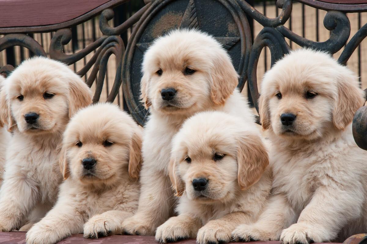 Unos cachorros de perro.