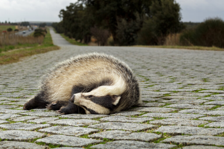 El hábitat trampa: ¿por qué es un problema para los animales?