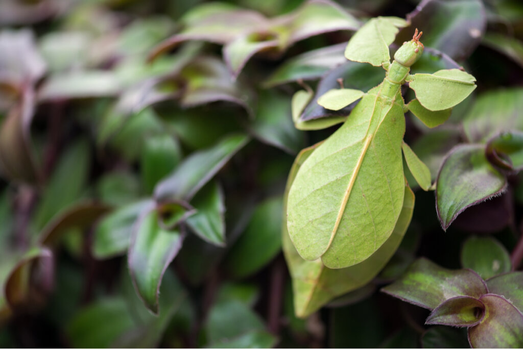 6 curiosos mecanismos de defensa de los insectos