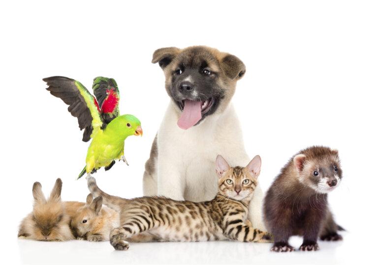 ¿Es importante fomentar la tenencia responsable de animales de compañía?