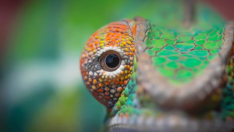 5 animales con ojos grandes