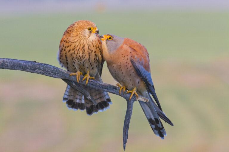 Intoxicación por plomo en aves rapaces