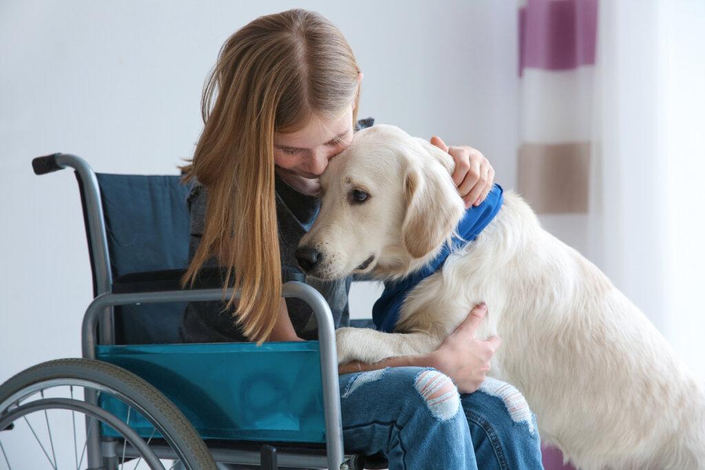 Nueva ley de perros de asistencia en Baleares