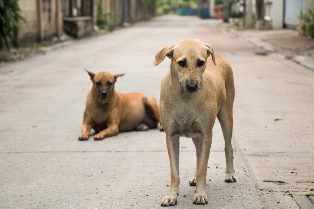 Un perro acude en auxilio de otro can que había sido atropellado