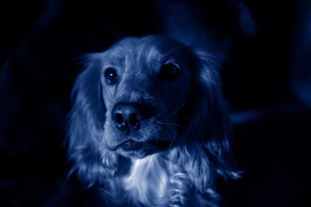 Perros azules aparecen en una ciudad rusa