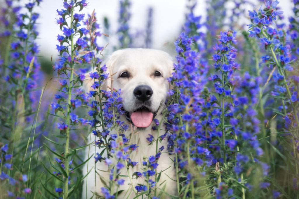 Alergia estacional en perros: todo lo que debes saber
