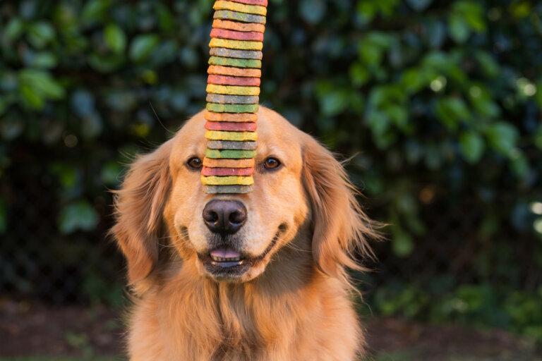 3 consejos para hacer galletas en casa para perros