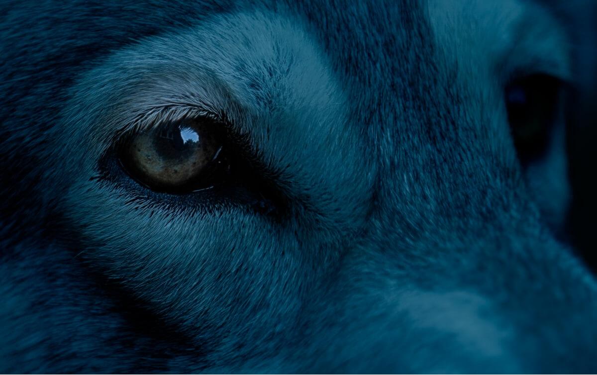 ¿Sabes a qué le temen los perros?