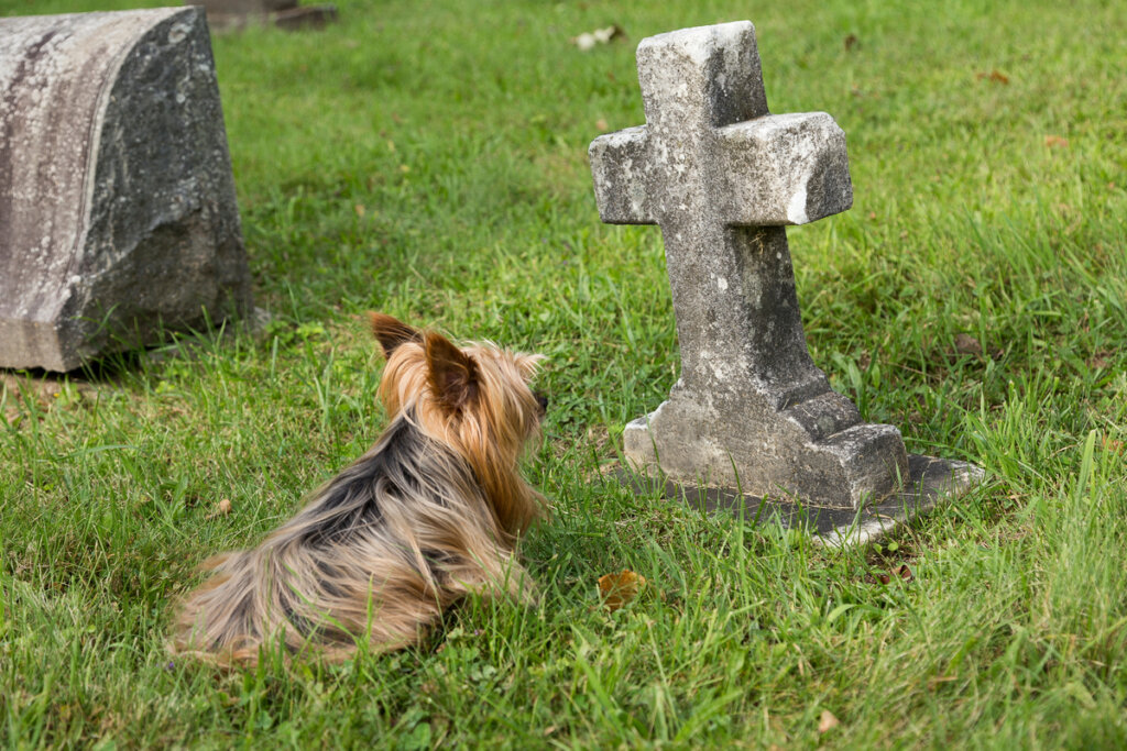 10 signos de que un perro va a morir