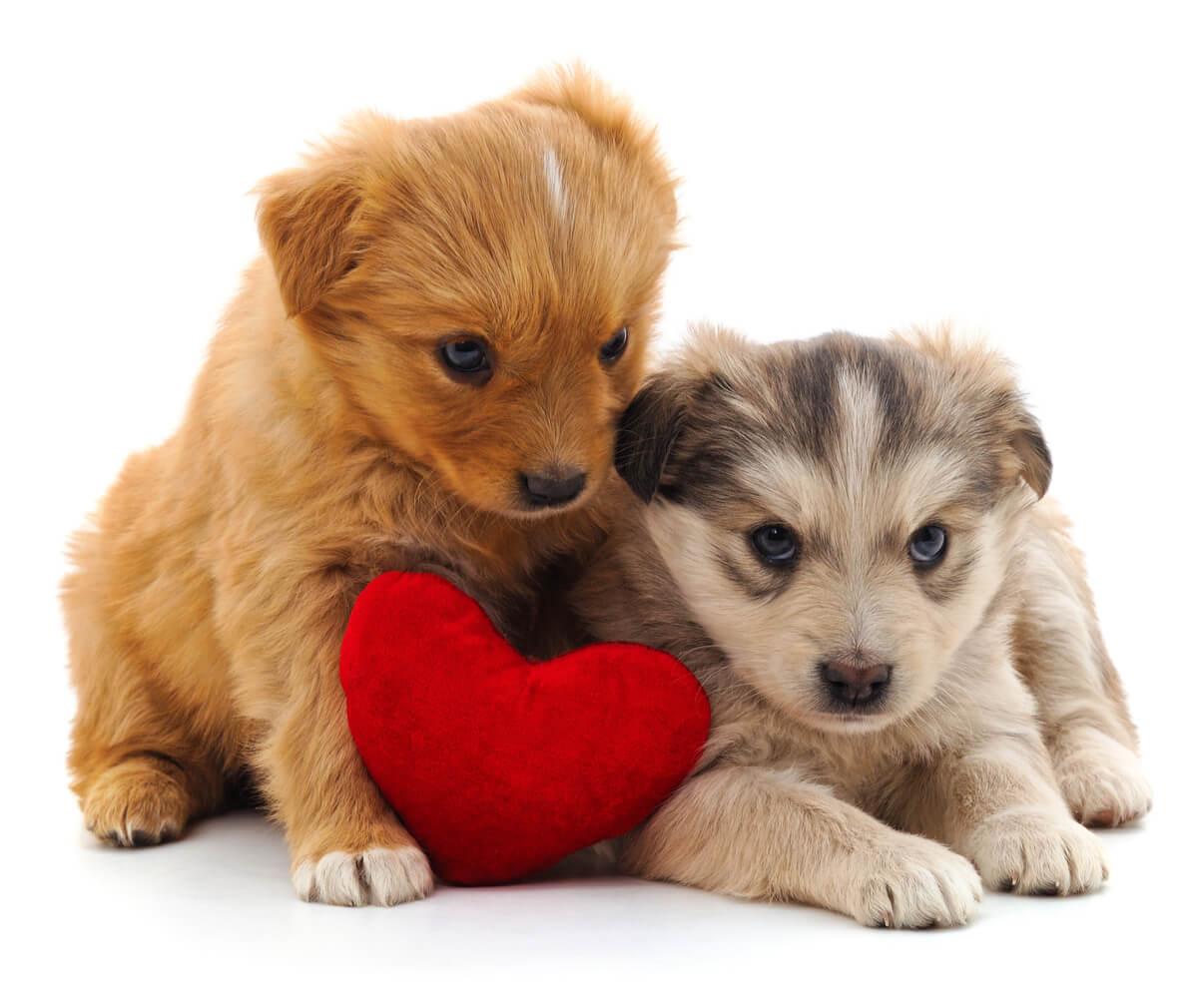 Un perro de regalo para San Valentín.