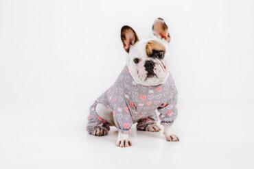 ¿Es cómodo para los perros usar ropa?