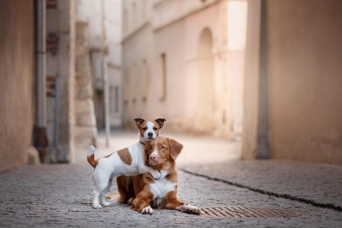 Unos perros abrazados en la calzada.
