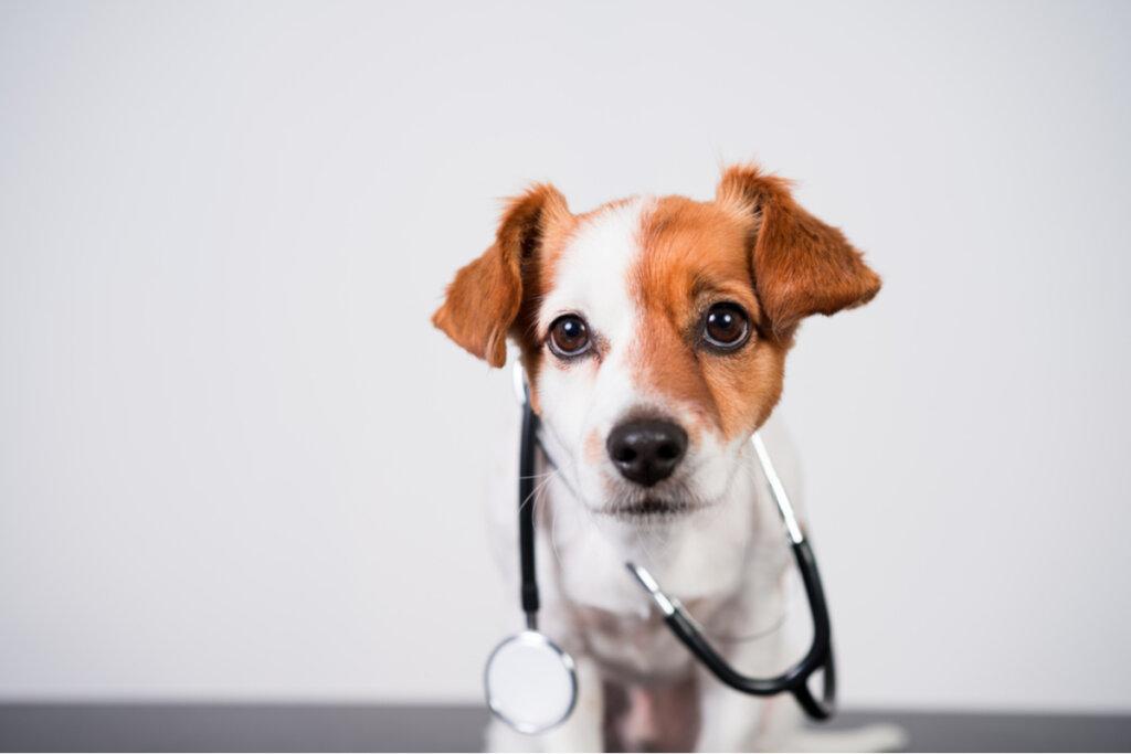 ¿Cómo hacer una RCP en perros?