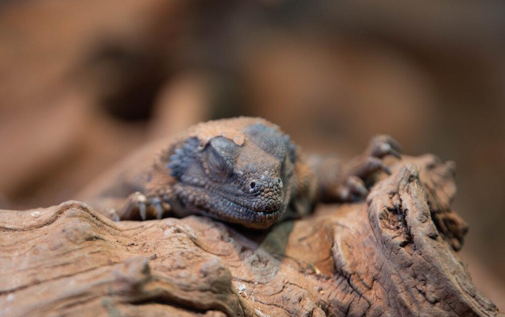 Brumación en reptiles domésticos: ¿en qué consiste?