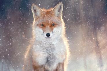 ¿Cómo se adaptan los animales al frío?