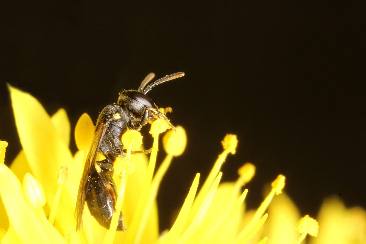 6 tipos de abejas