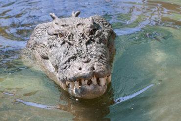 Los 7 animales más peligrosos de Australia