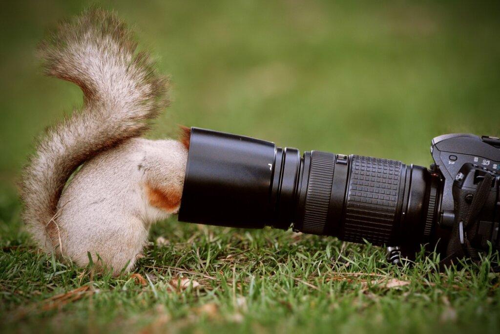 Los 6 mejores documentales de animales