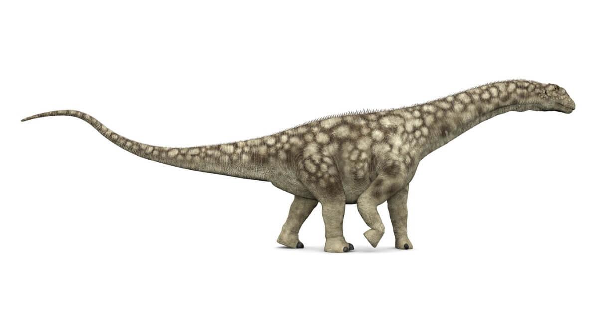Um Argentinosaurus em um fundo branco.