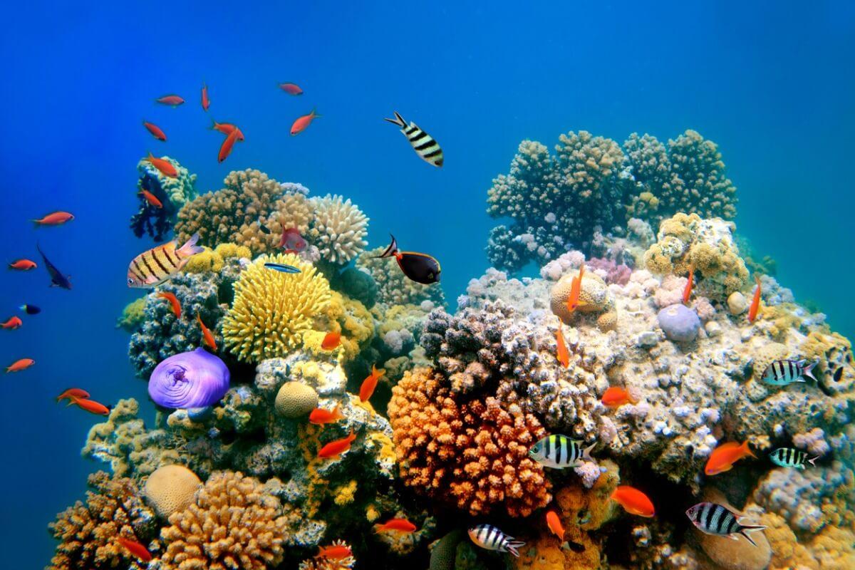 Un ejemplo de un tipo de arrecife de coral.