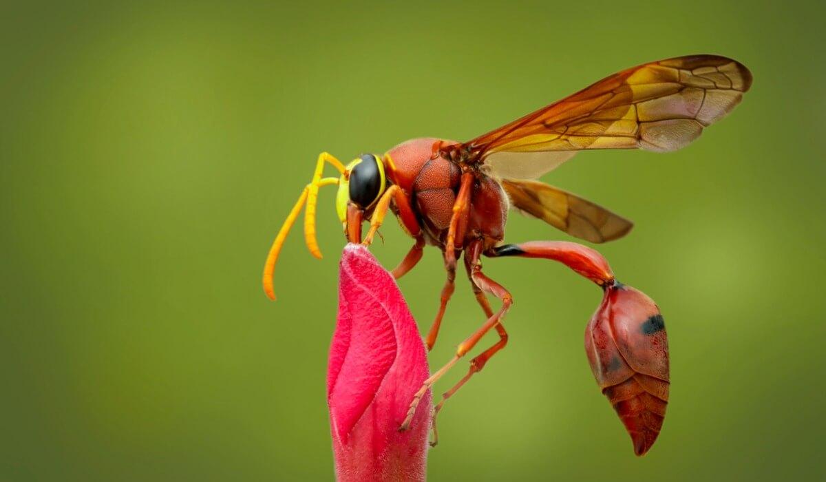 Otro de los tipos de insectos.